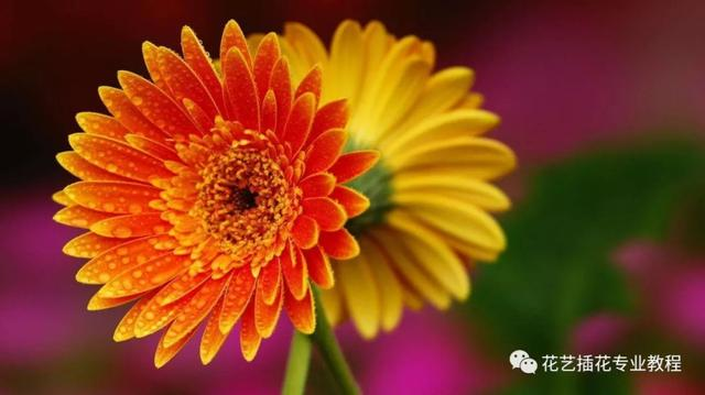 50种常见鲜花的花语大全,扫盲贴!_手机搜狐网