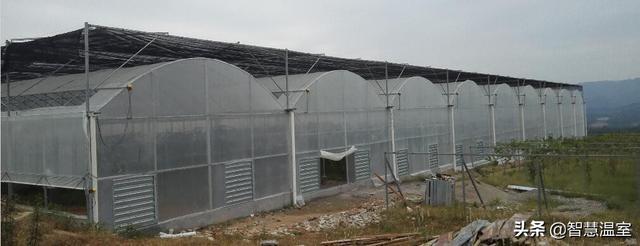 连栋温室大棚主要用来做什么,建造一个又需要多少钱呢?