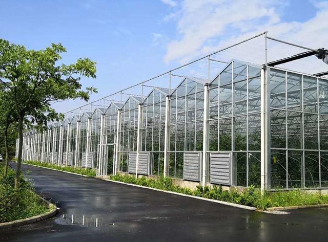 几种常见的规模化种植温室大棚样式及投资造价值得收藏