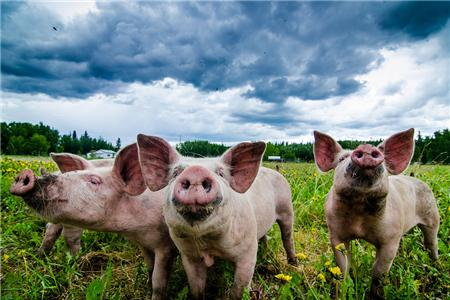 猪肉价格今日零售价