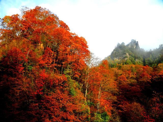 光雾山红叶节