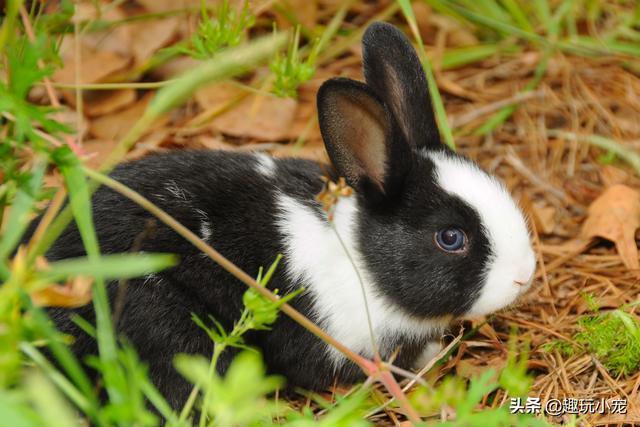 听说最近流行兔子猫?是朕出道的时候了!
