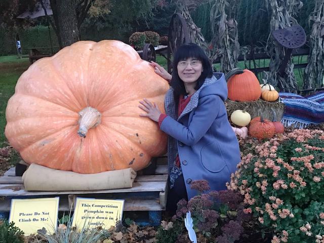 一千公斤重的巨型大南瓜,你见过吗?_手机网易网