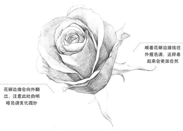 简单手绘花朵铅笔画
