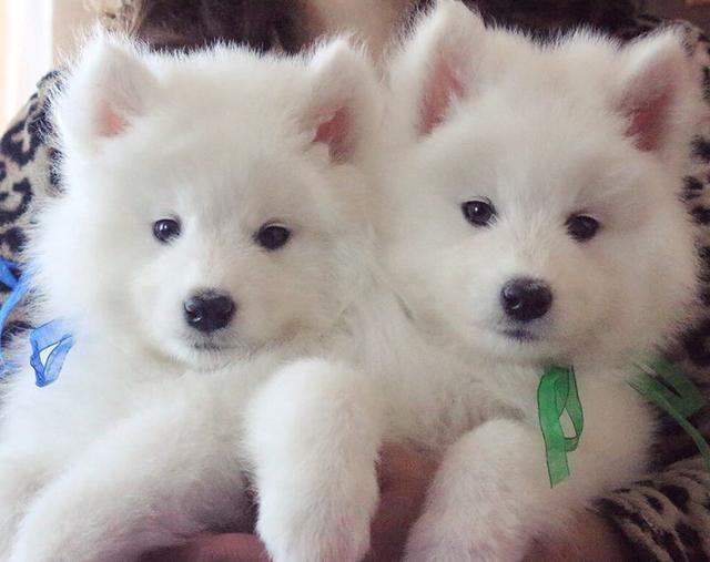 雪橇犬有几种