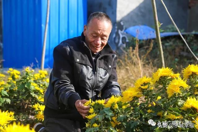 裴桥镇王阁村:环境美了 生活好了