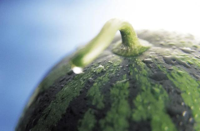 西瓜不是寒性的嗎?為什么有的人吃西瓜還會上火、患口腔潰瘍