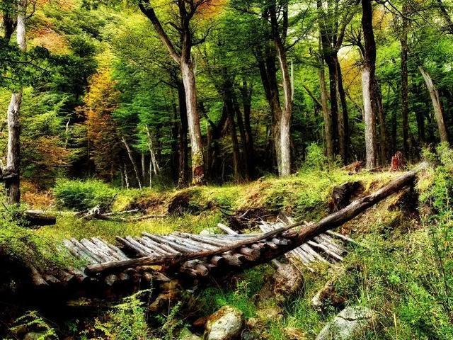 风景图片大全大自然
