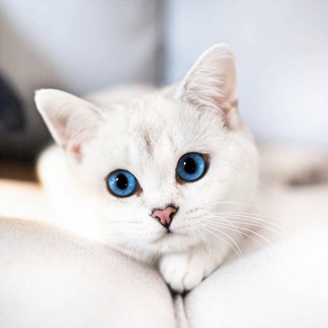 猫咪生病费钱还遭罪,认真做好这三件事情,让疾病远离猫咪!