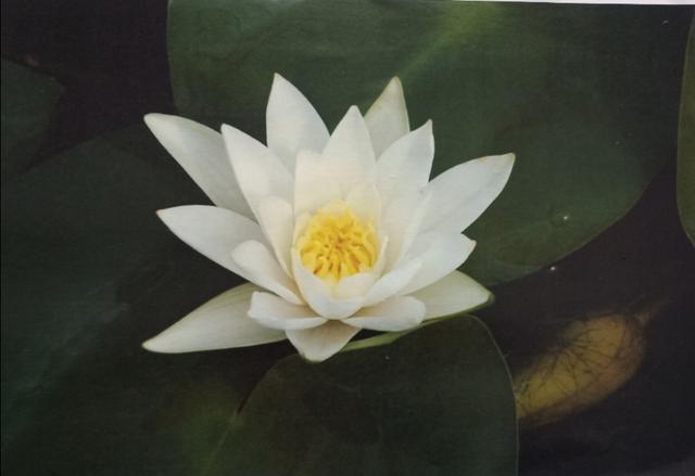 怼绿茶婊白莲花表情包