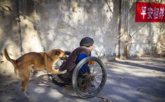 西藏猎犬小时候