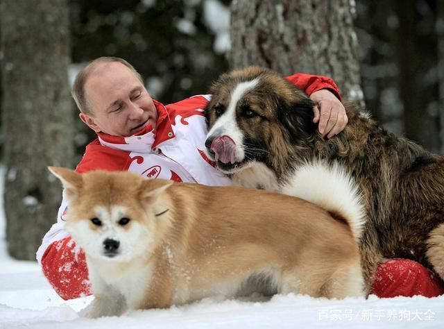 宠物犬种类