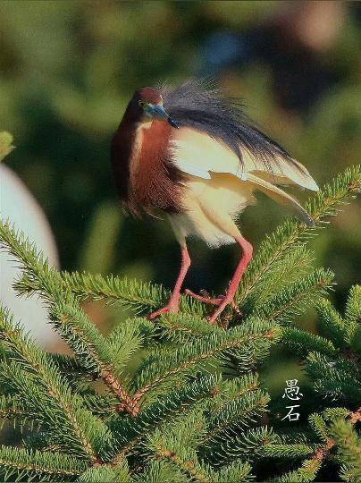 这种一年吃掉几十万害虫的鸟儿,走到哪都受欢迎,近距离接触一下