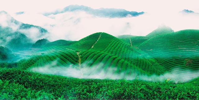 台中梨山茶准备进一步抢攻两岸市场 -慧聪网