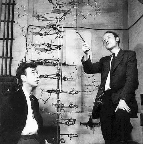 染色体、DNA、基因、RNA傻傻分不清?它们到底有什么区别?