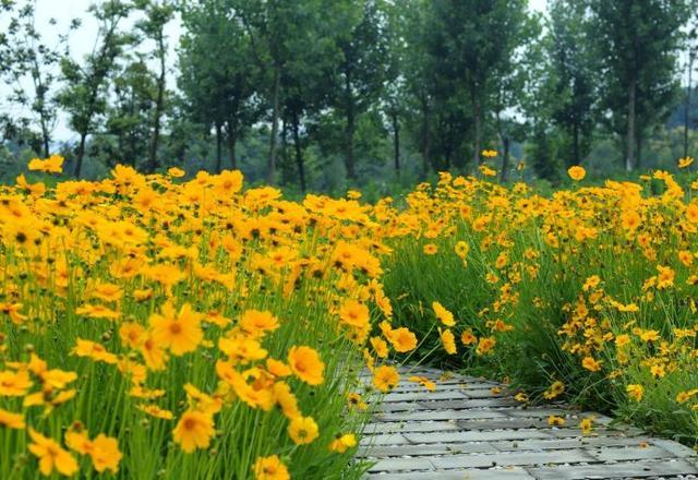 宿根花卉品种大全