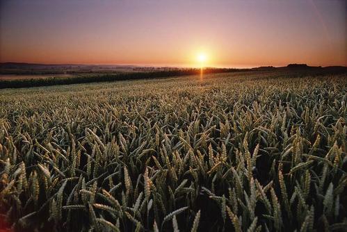 品牌农产品超市:打造产业互联网时代的新农业