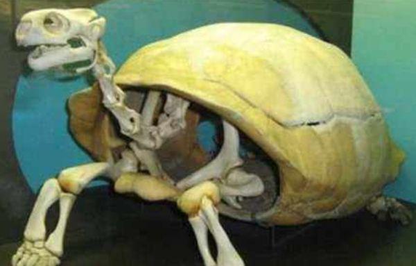 为什么养龟毁一生穷三代
