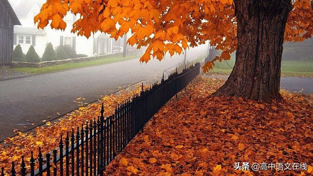 家乡的秋天景色