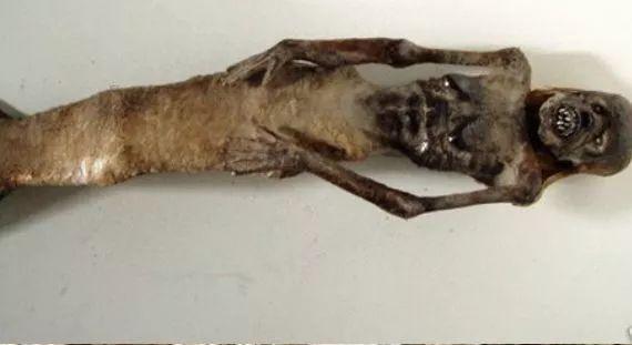 世界上真的存在美人鱼吗?40年前,中国捕捞到的异性怪物是什么?