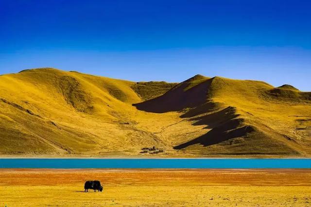 西藏好看的风景背景图