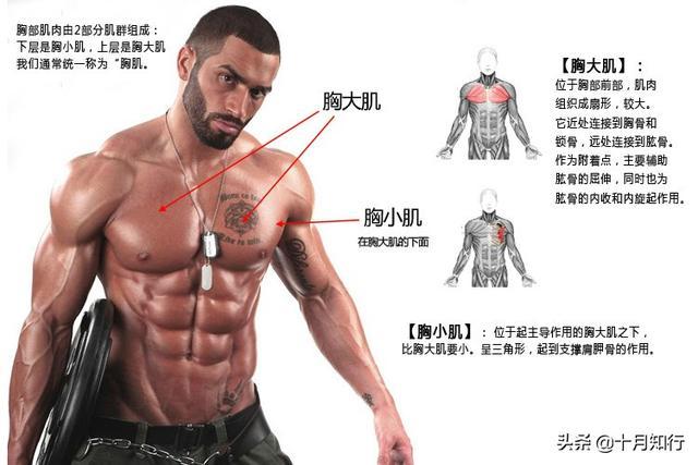 如何提高效率練胸肌?經典動作,全面刺激胸肌,把胸練厚練飽滿