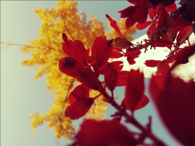 安国的秋色