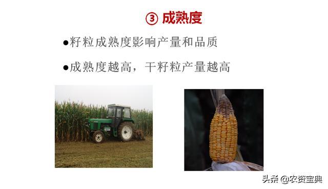 专家课堂:高温高湿条件下,玉米要严防这5种病害!附防治要点
