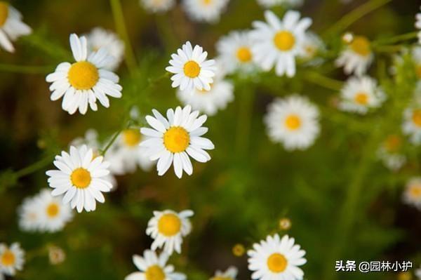 既可观赏,又可食用的花卉,你知道多少(一)?