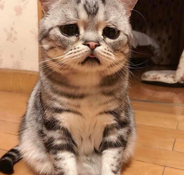 【哭脸猫咪头像】可怜巴巴 ? ???魔方甜点壁纸