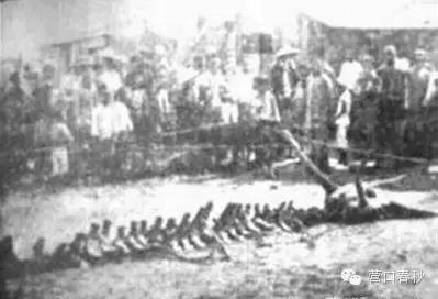 未解之谜盘点:营口发现疑似龙的尸体,头上生两角 -趣历史