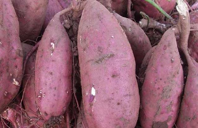 地瓜和红薯原来不是一个东西,那它们有什么区别呢?