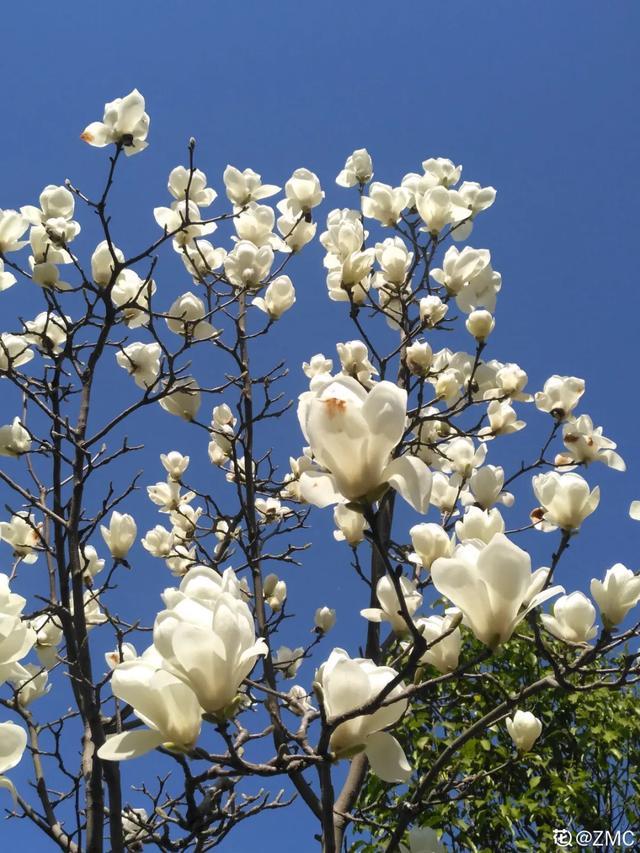 春天的花有哪些花名,37種春天開的花,你見過的都叫的上名