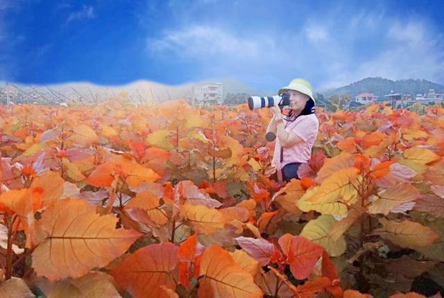 彩红杨:树下有美自成画 多彩少女总是诗