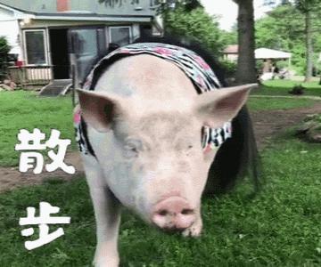 笑死人搞笑猪猪图片大全,猪猪搞笑图片下载-忍不住笑图片网