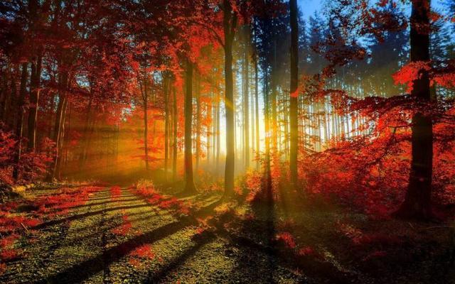 秋季养生您了解多少?