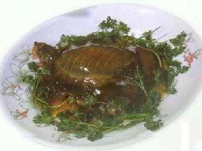 黄焖甲鱼图片大全大图