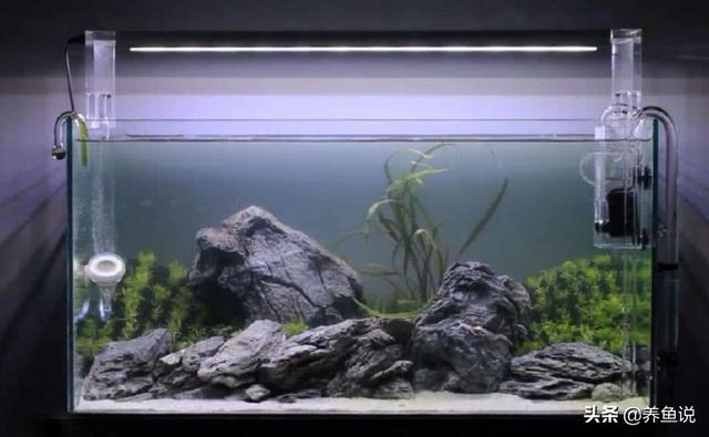 鱼缸应该多长时间换水?