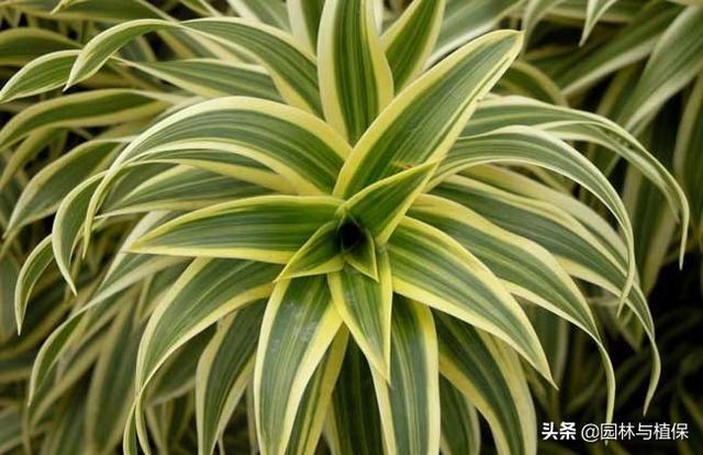 九大空气净化植物排行榜 - 日记 - 豆瓣