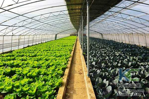 「微景观」常见花草蔬菜病虫害和防治方法