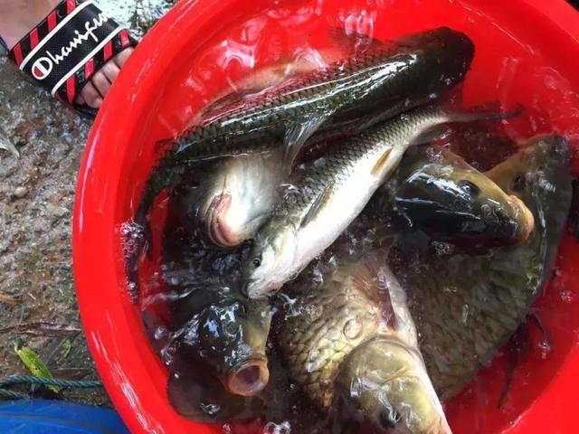 小水库渔情有好有坏,已整理汇总,周末出行可参考