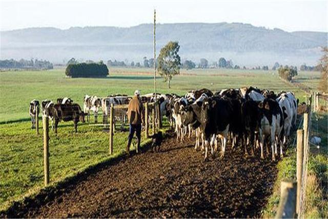 美韩指望不上,澳洲又将目光转向中国,畜牧业协会:望中国放下成见