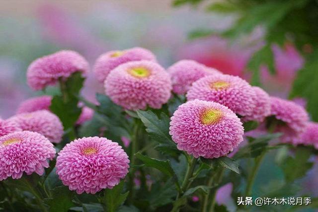 各种花的名字寓意好