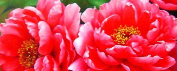 牡丹花种植秘诀,赶紧戳开看,记得收藏一下哦!