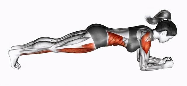 腹肌轮练全身的技巧