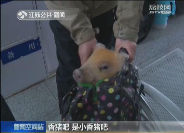 江苏女子带宠物猪坐火车被拦下:猪是我的孩子,凭啥不让带?