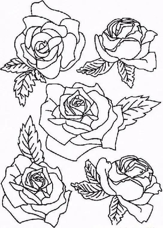 简单的玫瑰花画法,画一朵送给她吧