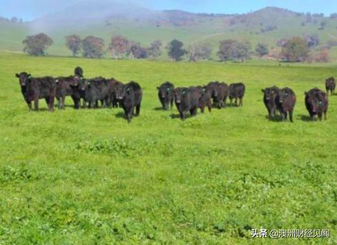 华企斥资$1800万收购新州农场 1.3万公顷良田不够还想再买