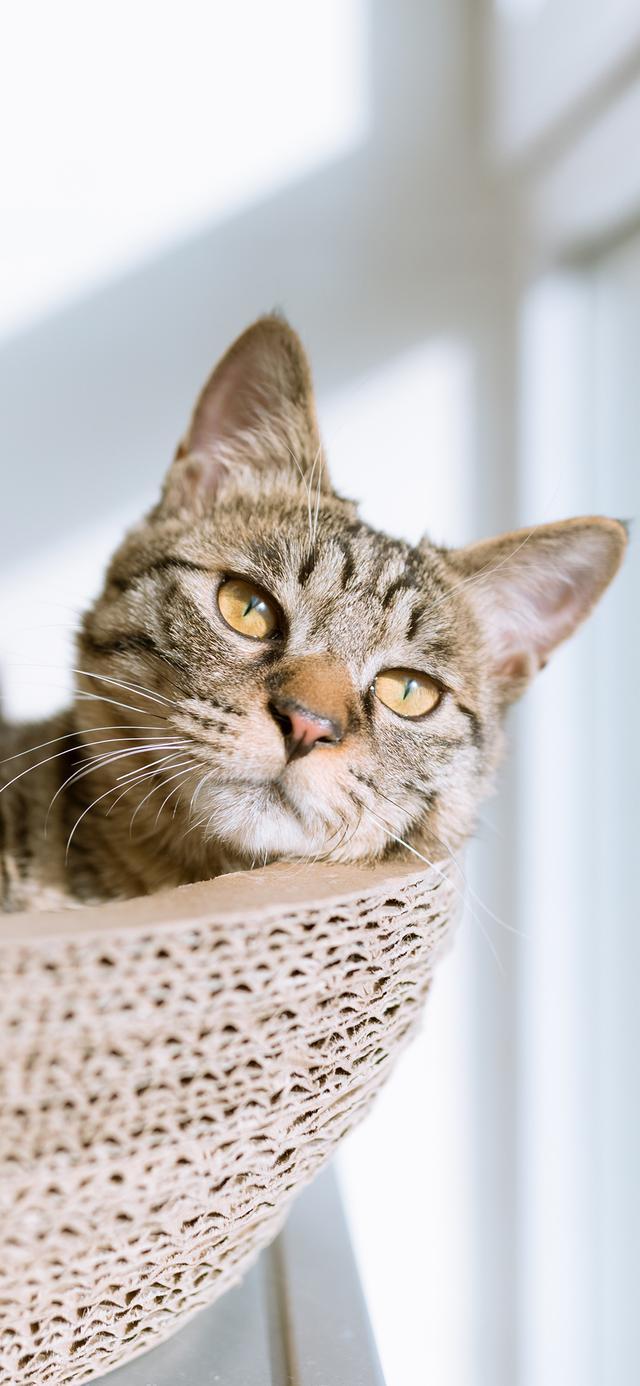 貓咪超清全屏壁紙