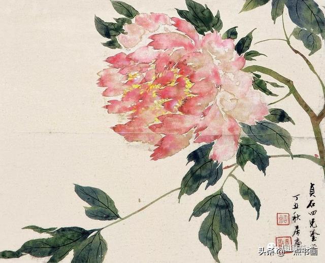 简易工笔白描花卉图片